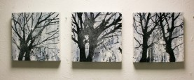 Herts Woods Triptych (small) 30 x 30 each, £425 for all 3 £150 each